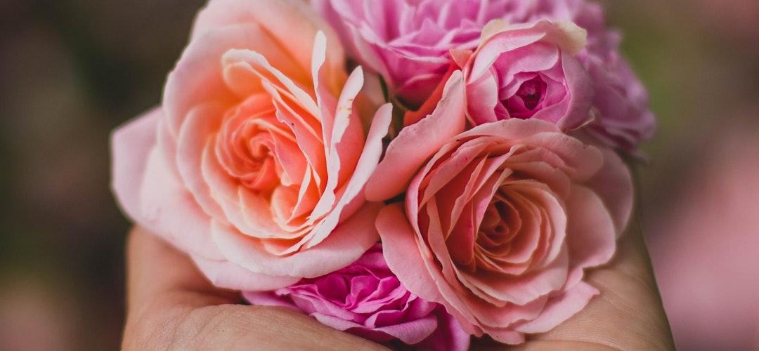 Bunga untuk Perawatan Kulit Alami